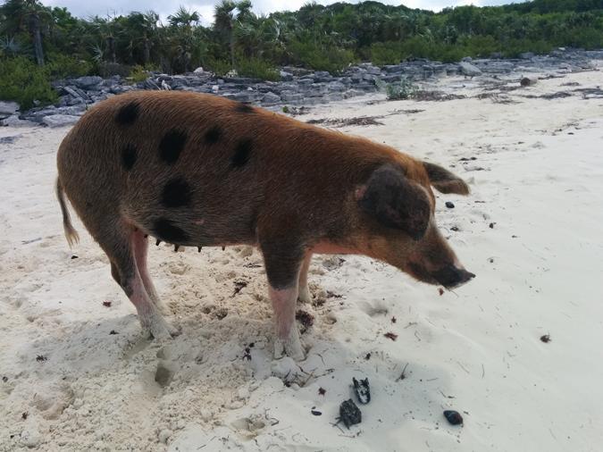 miami zu den bahamas
